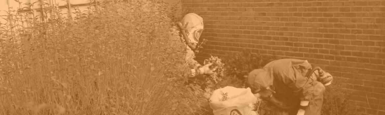 Asbest verwijderen in tuinen en plantsoenen